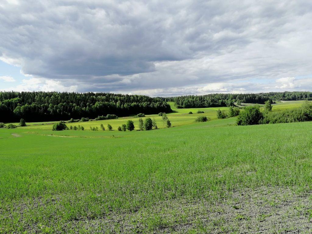 Markulan pellot Vanjoelle päin
